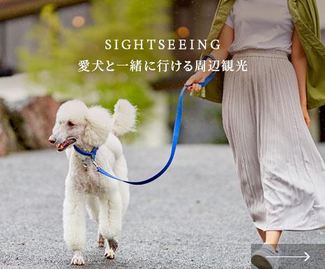 愛犬と一緒に行ける周辺観光